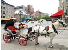 Old Montreal Place Jacques-Cartier
